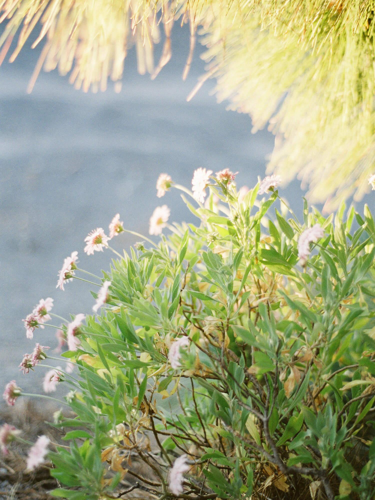 film photography fuji400h